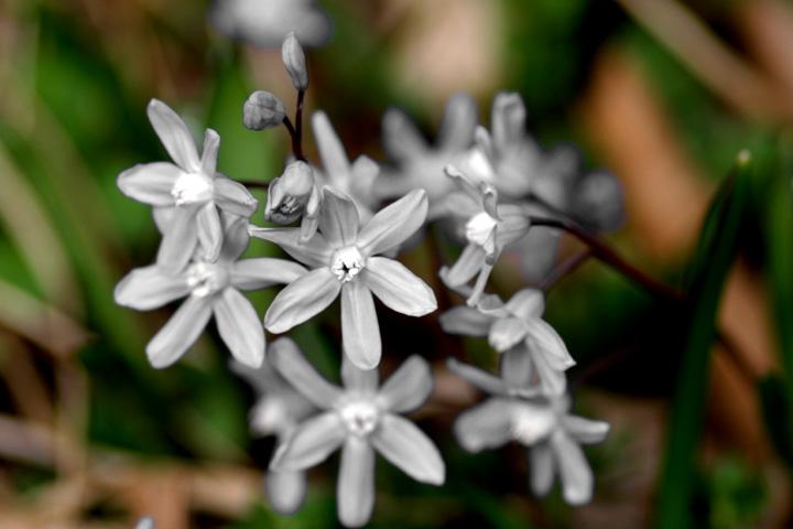 Unpainted Flowers.jpg
