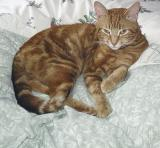 Our new boy Monty 12 Feb 05