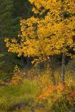Banff (_P9E3101.jpg)