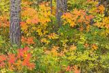 Banff (_P9E3105.jpg)