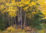 Banff (_P9E3116.jpg)