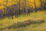 Banff (_P9E3137.jpg)
