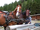 Our Trusty Carriage Team