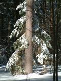 Tree Hugging  Tree