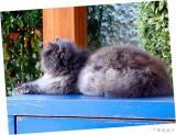 Cat 2004-03-23  001.jpg