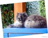 Cat 2004-03-23  002.jpg