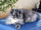 Cat 2004-03-23  003.jpg