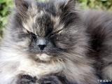 Cat 2004-03-23  004.jpg