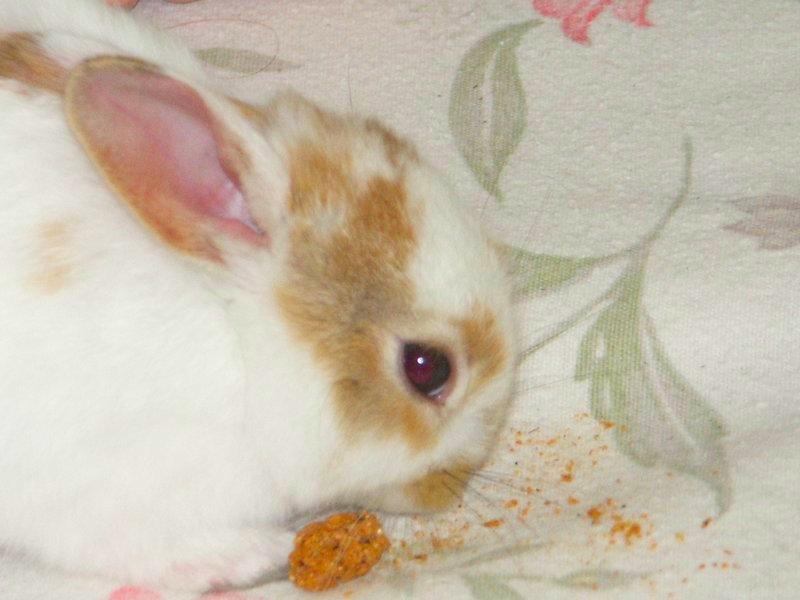 Rabbit   2004-04-06 010.jpg
