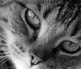 Chelsie, Black and White Cat Photos