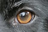 rosie-eye.jpg
