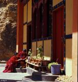 Buddhist Nuns Reading the Scriptures