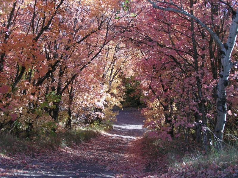 City Creek Autumn Scene with Maple Trees p9240023 small.jpg