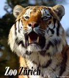 Circus - Zoo und Cie.