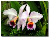 Orchids 2005 Vol. #1