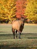 Autumn Saunter