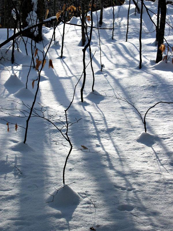 snow_trees1_ps_4w.jpg