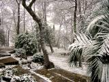 Snow on the French Riviera 87003665.jpg