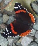 butterfly 395