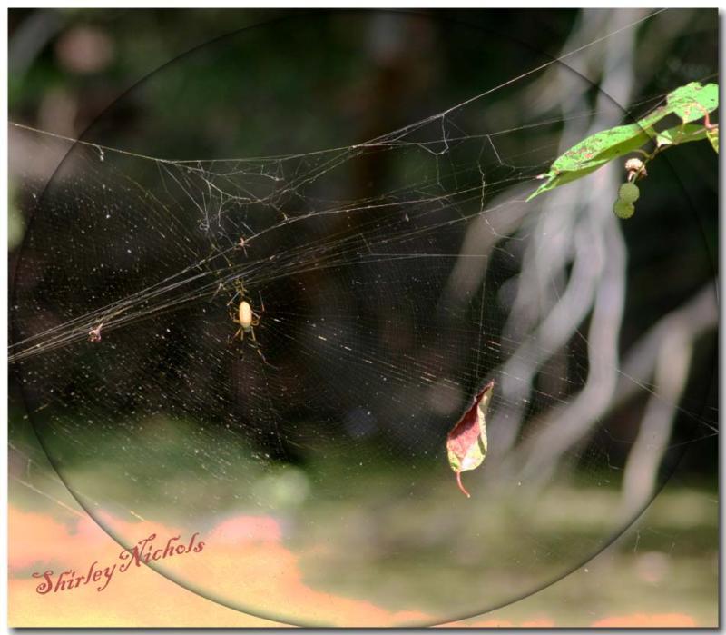 Beauty in Life-Survival-Death.jpg