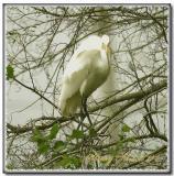 Louisiana Egrets -2005