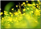 Wildflowers of southern Louisiana