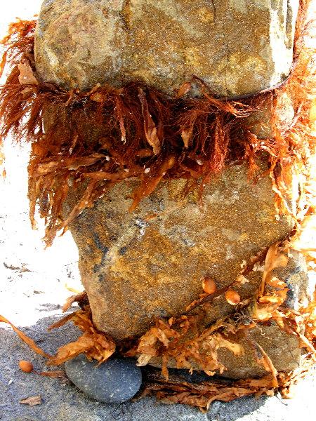 Seaweed & Stone