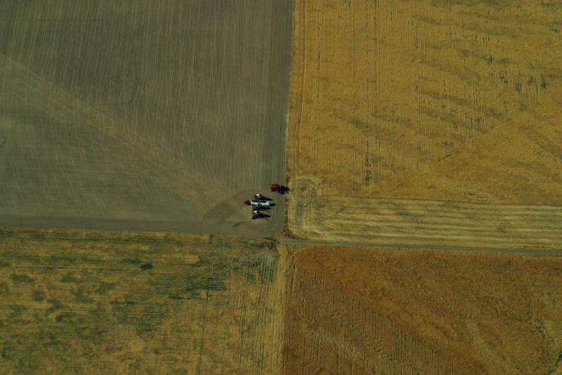 Corn fields, Lewiston, Wa
