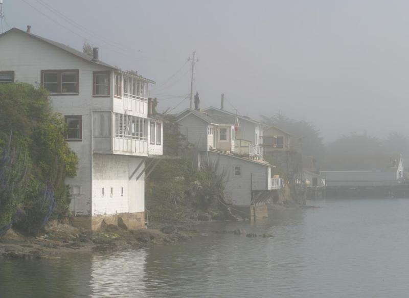 Mist, Bodega Bay