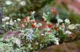 lichen3.jpg