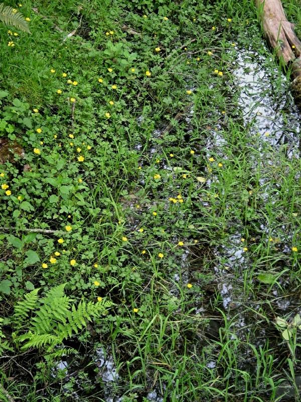 Pond with Wildflowers