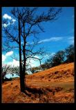 hikingtree01f.jpg