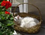 Erol's cat (Yesilköy)