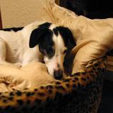 Joop's Dog Log - Thursday Apr 08