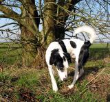 Joop's Dog Log - Friday Apr 09