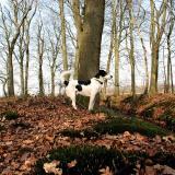 Joop's Dog Log - Saturday Apr 10