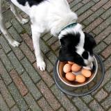 Joop's Dog Log - Sunday Apr 11