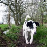 Joop's Dog Log - Wednesday Apr 14