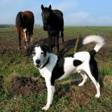 Joop's Dog Log - Thursday Apr 15