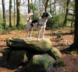 Joop's Dog Log - Friday Apr 16