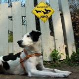 Joop's Dog Log - Saturday Apr 17