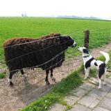 Joop's Dog Log - Sunday Apr 18