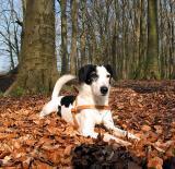 Joop's Dog Log - Monday Apr 19