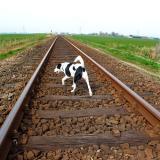 Joop's Dog Log - Tuesday Apr 20