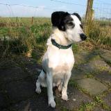 Joop's Dog Log - Thursday Apr 22
