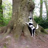 Joop's Dog Log - Friday Apr 23