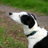 Joop's Dog Log - Saturday Apr 24