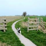 Joop's Dog Log - Sunday Apr 25