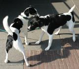 Joop's Dog Log - Tuesday September 07