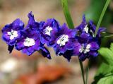 IMG_5751 flowers.jpg